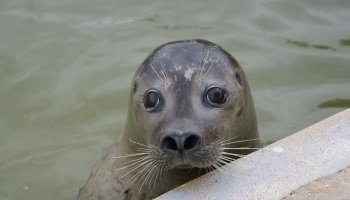 MABLETHORPE SEAL SANCTUARY